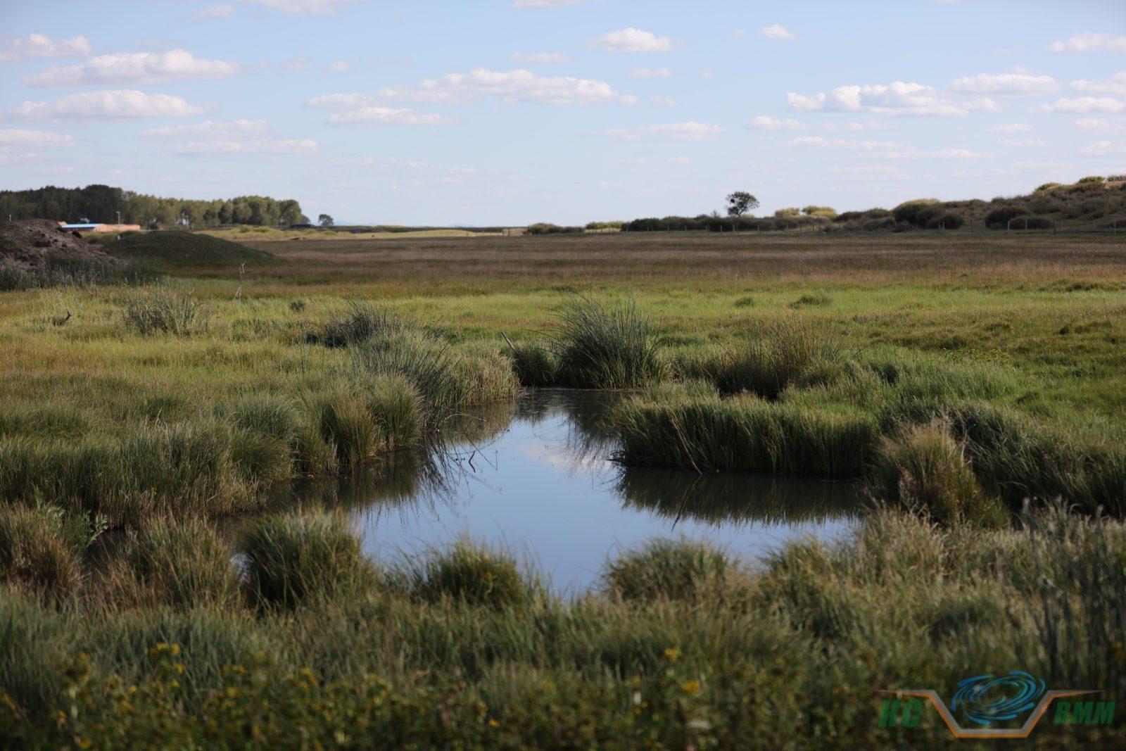 дренаж болотистого участка